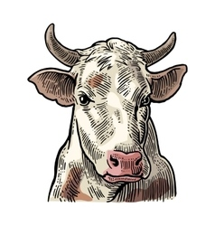 Cows head Hand drawn in a graphic style vector image vector image