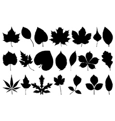 Leaf silhouettes vector