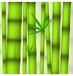 Background - green bamboo stems and twig with vector