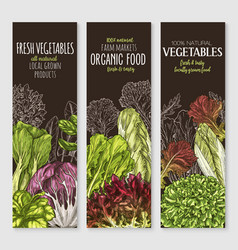 banners of farm grown salads vegetables vector image vector image