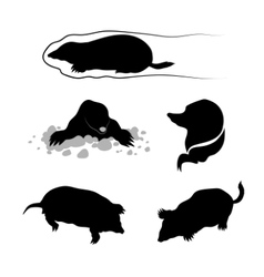 Silhouettes of a mole vector