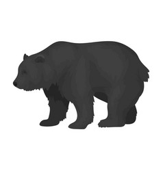 Canadian brown bear canada single icon in vector