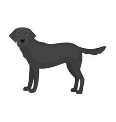 Mastiff single icon in monochrome stylemastiff vector