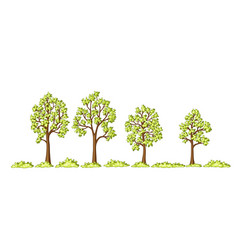 some trees and bushes vector image vector image