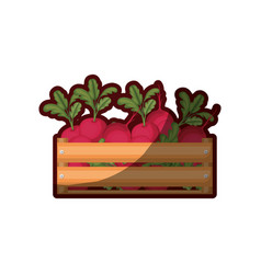 Colorful silhouette of wooden box with beets and vector