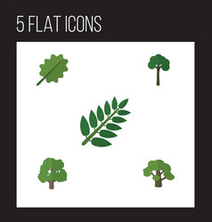 Flat icon bio set of evergreen decoration tree vector