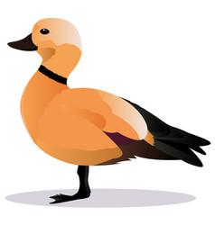 Ogar bird vector