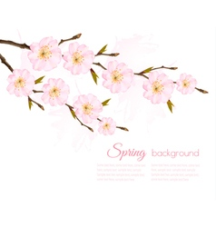 Spring background with a sakura branch vector