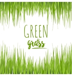 Set realistic green grass lawn vector