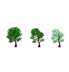 The set of summer and spring trees vector