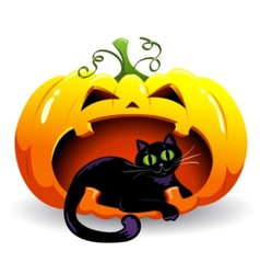 Pumpkin and cat vector