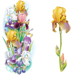 Garlands of Iris flowers vector image