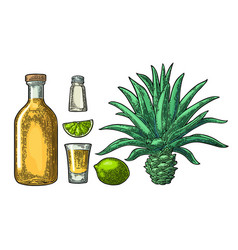 glass and botlle of tequila cactus salt lime vector image