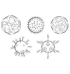Influenza viruses vector