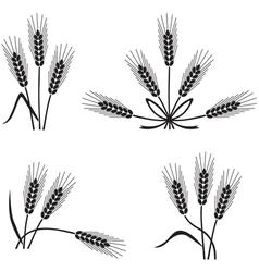 spikelet vector image