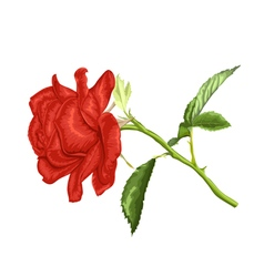 Beautiful red rose with long stem and leaves vector