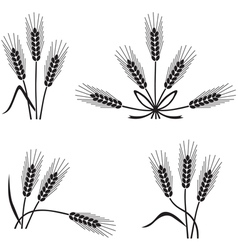 spikelet vector image