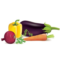 Eggplant peppers carrots onions parsley marjoram vector