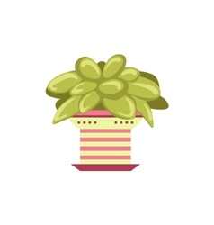 Succulent plant in pink pot vector