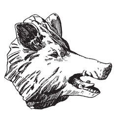 Boar head was designed by habenschaden of munchen vector
