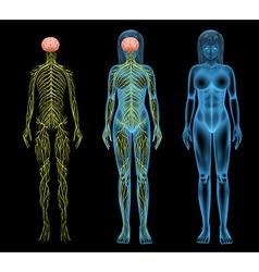 Female nervous system vector image vector image