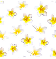 Plumeria tropical flowers seamless pattern vector