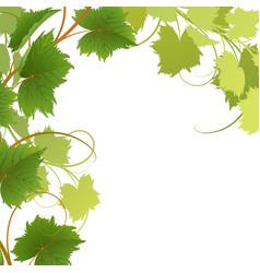 vine vector image vector image