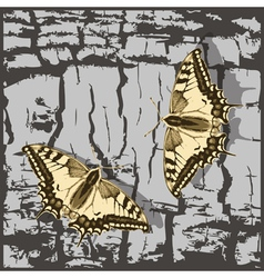 Flying butterfly over grunge wall vector image