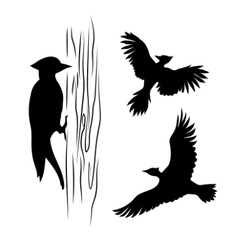 Silhouettes of a woodpecker vector