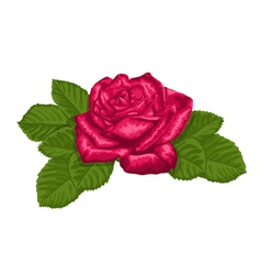 red rose and leaves isolated on white vector image vector image