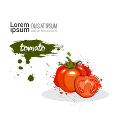 Tomato hand drawn watercolor vegetable on white vector