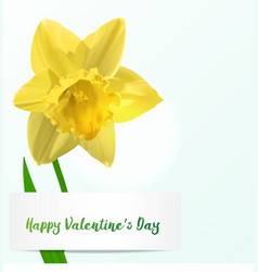 Valentine background with jonquil vector