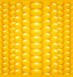 Corn background vector