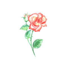 Single red rose with green leaf vector