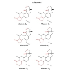 Chemical formulas of aflatoxins b m g vector