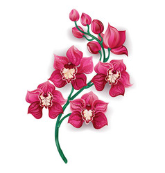 Bright pink orchid vector