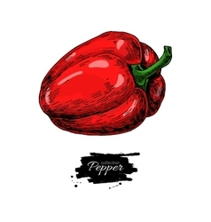 Red Bell Pepper hand drawn vector image vector image