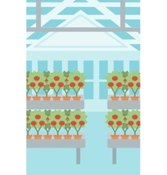 Background of tomatoes in the greenhouse vector