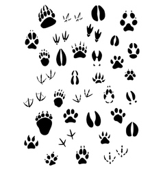 Animal footpints set vector image vector image