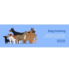 Professional Dog Training Service Banner vector image
