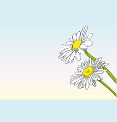 Two daisies against clear background vector