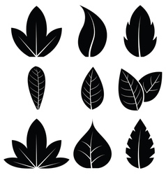 Leaves icon set on white background vector