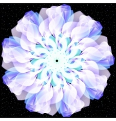 flower Abstract floral on black vector image