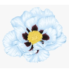 Tree peony white flower isolated vector