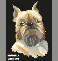 Colored brussels griffon portrait vector