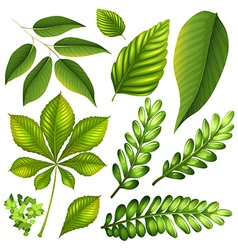 Different kind of leaves vector image vector image