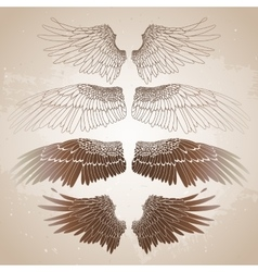 Graphic wings collection vector image