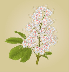 Chestnut tree flower with leaves vintage vector