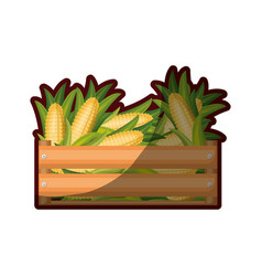 Colorful silhouette of wooden box with corncobs vector