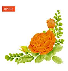 Corner composition orange rose flowers with vector